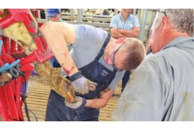 Hoof Health: Start with clean dry hooves